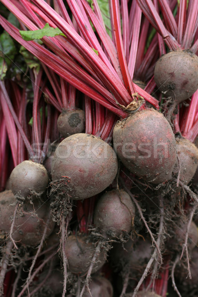 Organiczny burak szczegół ziemi jedzenie Zdjęcia stock © naffarts