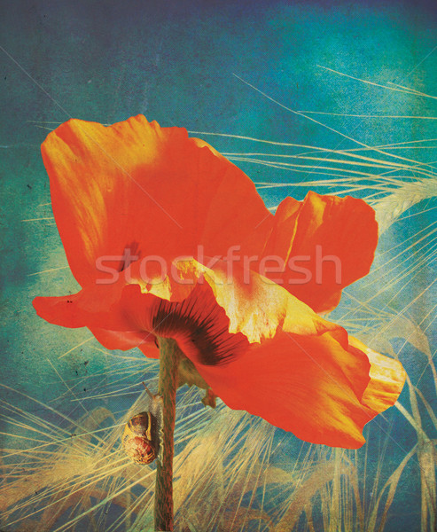 Poppy Grunge Stock photo © naffarts