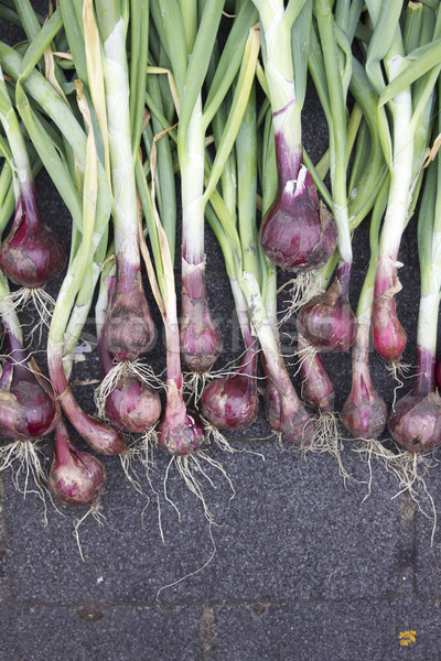 Red Onions Stock photo © naffarts