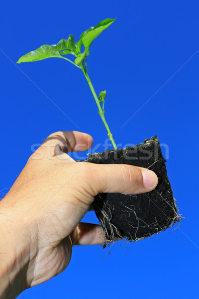 Stock photo: Young plant and roots