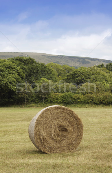 Stock photo: Straw Bail