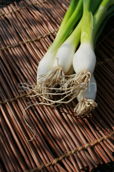 Still life spring onions Stock photo © naffarts