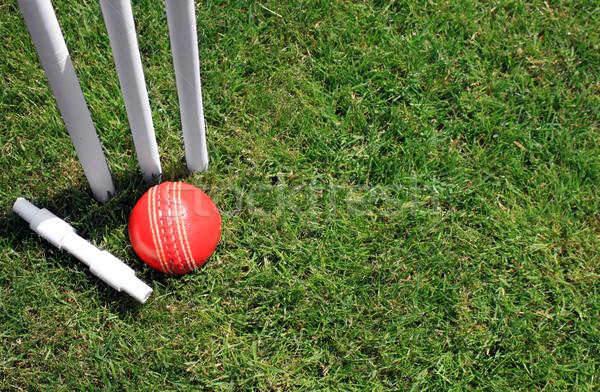 Borgtocht bal Rood leder cricket groen gras Stockfoto © naffarts