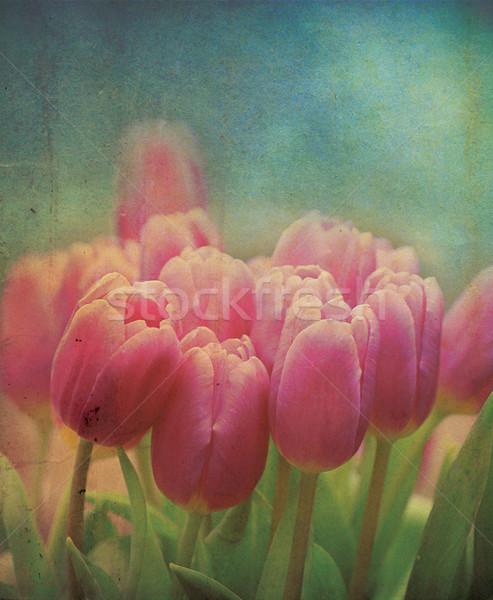 Grungy Tulips Stock photo © naffarts