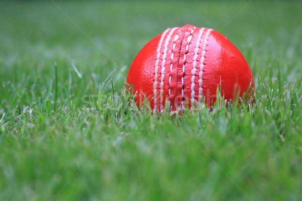Leather Cricket Ball Stock photo © naffarts