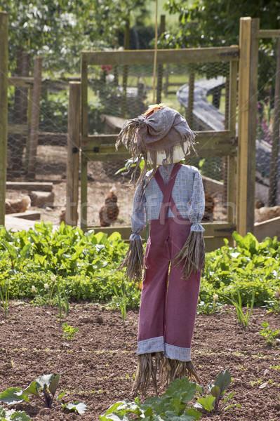 Garden Scarecrow Stock photo © naffarts