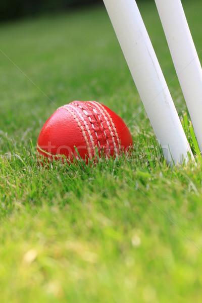 Cricket Stock photo © naffarts