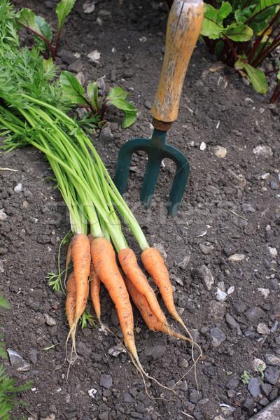 Organique carottes augmenté Photo stock © naffarts