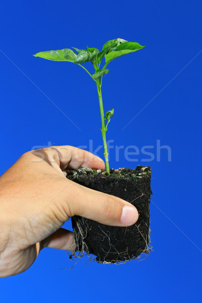 Young Plant Stock photo © naffarts