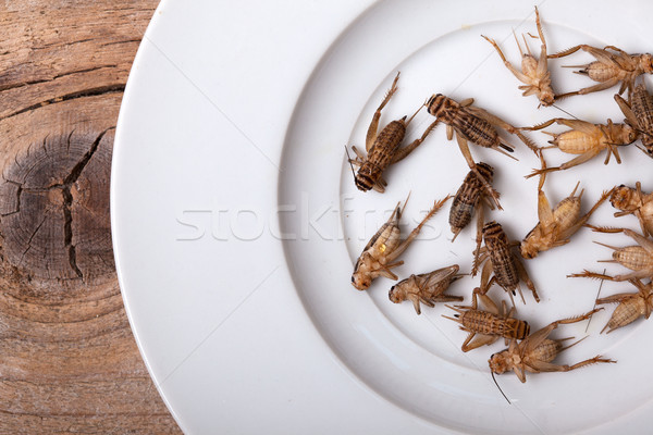 Frozen House Crickets Stock photo © nailiaschwarz