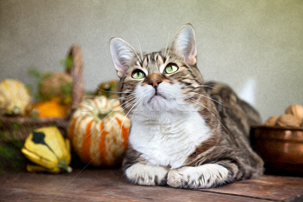 Autumn Cat Painting Stock photo © nailiaschwarz