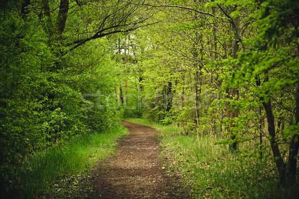 Forest Path Stock photo © nailiaschwarz