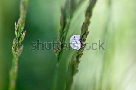 Lumaca erba lama primavera prato casa Foto d'archivio © nailiaschwarz