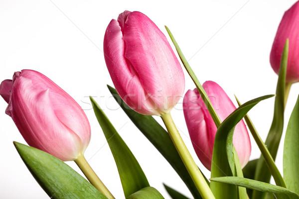 Rózsaszín tulipánok virágcsokor gyönyörű fényes vízcseppek Stock fotó © nailiaschwarz
