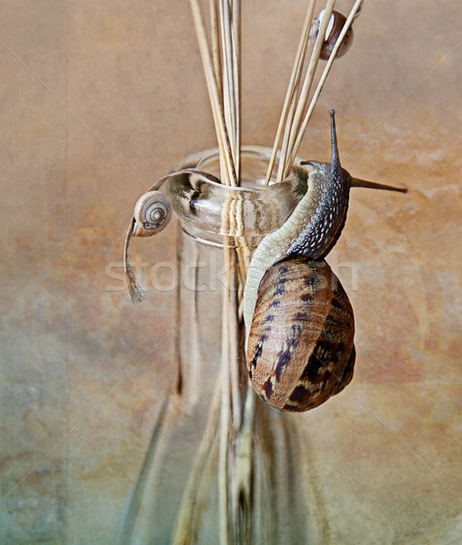 カタツムリ 静物 小 ビッグ 家 自然 ストックフォト © nailiaschwarz