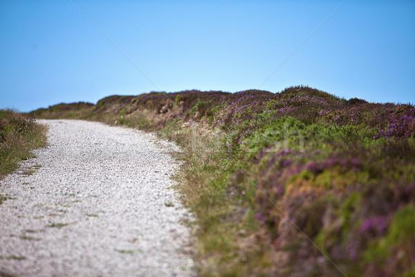 Road to the beach Stock photo © nailiaschwarz