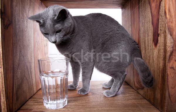 Stock fotó: Orosz · kék · macska · üveg · víz · fa
