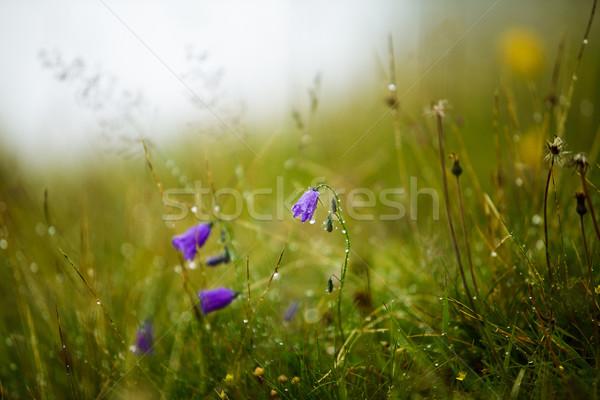 Alpine weide kruiden bloemen zomer water Stockfoto © nailiaschwarz