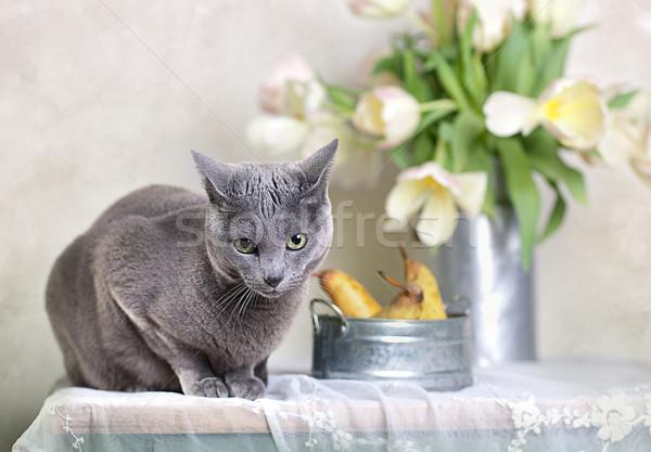 Ruso azul gato mesa tazón frescos Foto stock © nailiaschwarz