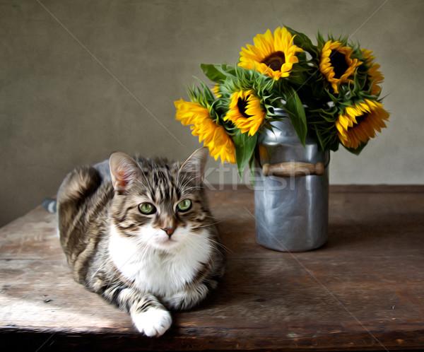 Cat and Sunflowers Stock photo © nailiaschwarz