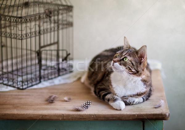 Cat and Bird Cage Stock photo © nailiaschwarz