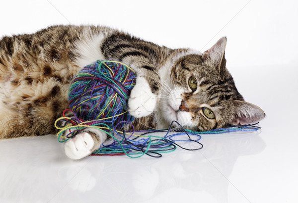 Stock photo: Playful Cat