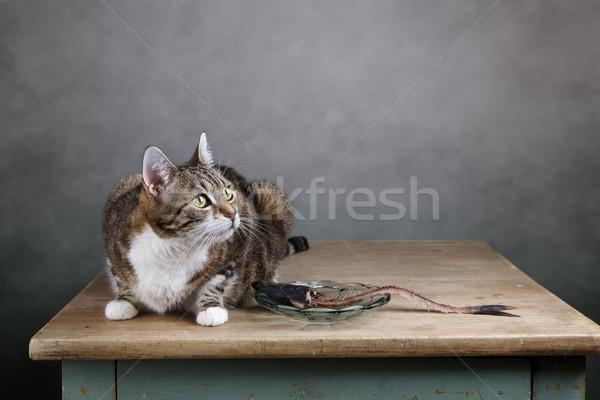 Cat and Herring Stock photo © nailiaschwarz