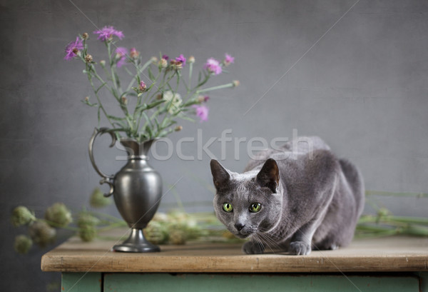 Still Life with Cat Stock photo © nailiaschwarz