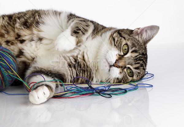 Játékos macska portré labda gyapjú fehér Stock fotó © nailiaschwarz