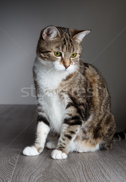 Stock photo: Cat Portrait
