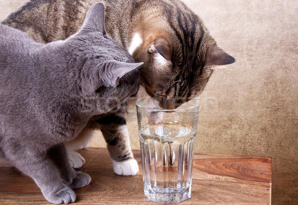 2 猫 ガラス 水 木材 ストックフォト © nailiaschwarz