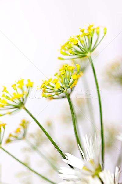 Kırılgan çiçek gökyüzü doğa yaz Stok fotoğraf © nailiaschwarz