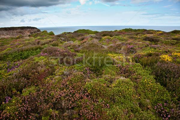 Cap roślinność krajobraz lata ocean Zdjęcia stock © nailiaschwarz