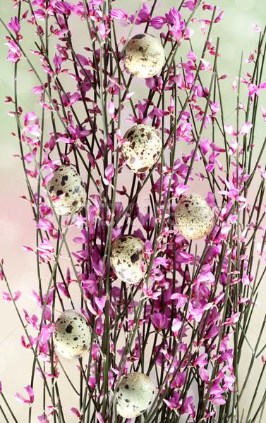 Stockfoto: Voorjaar · takje · roze · bloesems · klein · eieren