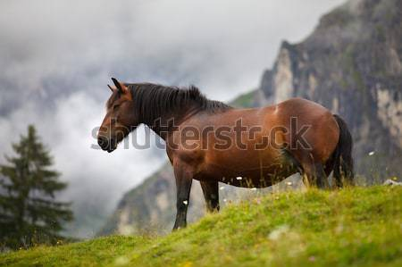 Stock photo: Horse on Alpine Pasture