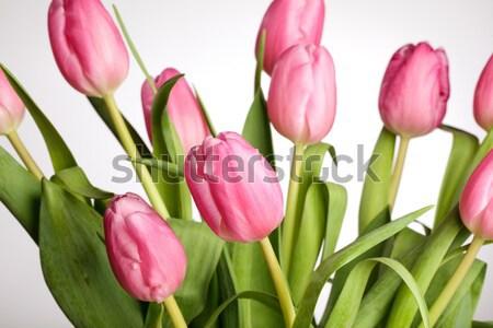 Rózsaszín tulipánok virágcsokor gyönyörű fényes közelkép Stock fotó © nailiaschwarz