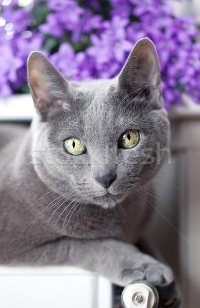 Kat radiator russisch Blauw ontspannen venster Stockfoto © nailiaschwarz