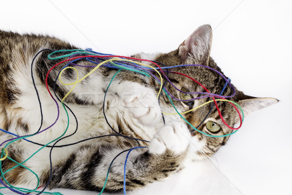 Stock photo: Playful Cat