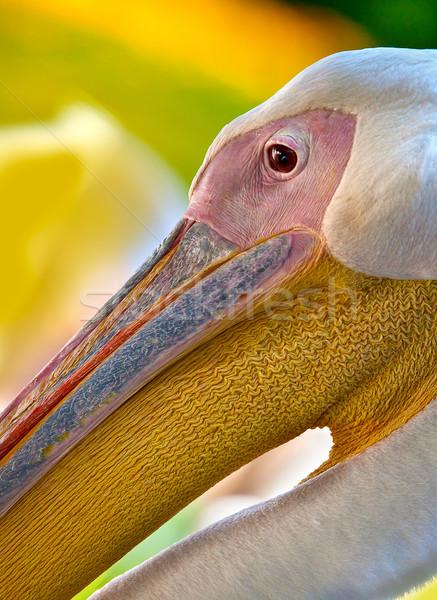 лице глаза клюв оранжевый птица Сток-фото © nailiaschwarz