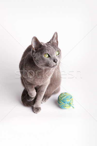 серый кошки мяча шерсти сидят глядя вниз Сток-фото © nailiaschwarz