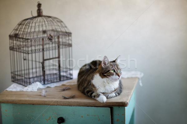 Gato gaiola olhando tabela retrato Foto stock © nailiaschwarz