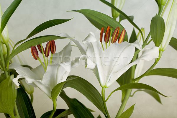 白 ユリ 花束 美しい ユリ 花 ストックフォト © nailiaschwarz