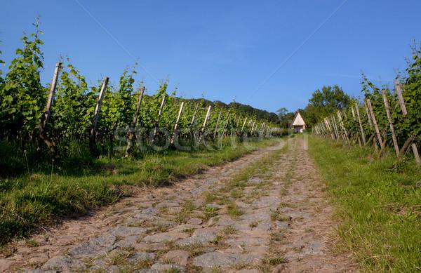 Wijngaard zuidwest Duitsland industrie boerderij plant Stockfoto © nailiaschwarz