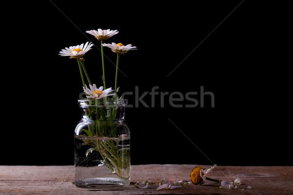 Százszorszép virágok üveg fekete stúdiófelvétel piros Stock fotó © nailiaschwarz