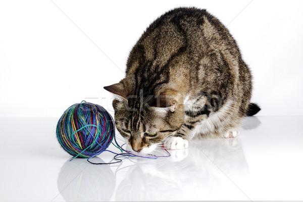 Playful Cat Stock photo © nailiaschwarz