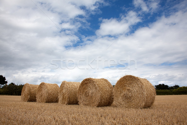 Hay Bale Stock photo © nailiaschwarz