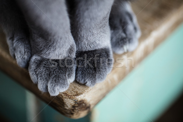 Pussyfoot Stock photo © nailiaschwarz