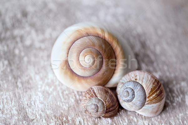 üres csiga kagylók barna test vicces Stock fotó © nailiaschwarz