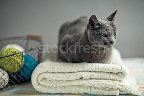 ロシア 青 猫 肖像 セーター ストックフォト © nailiaschwarz