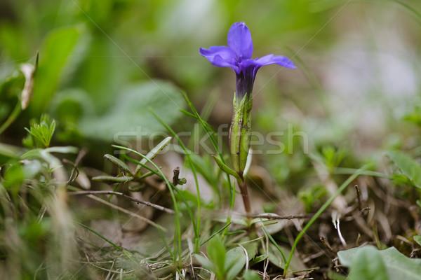 Alpino prato erbe fiori estate erba Foto d'archivio © nailiaschwarz